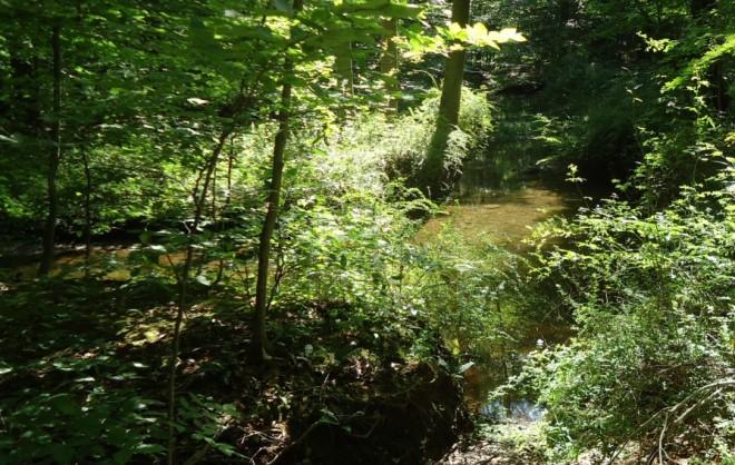 Loantaka_Brook_Reservation_bikeway_stream_and_bushes